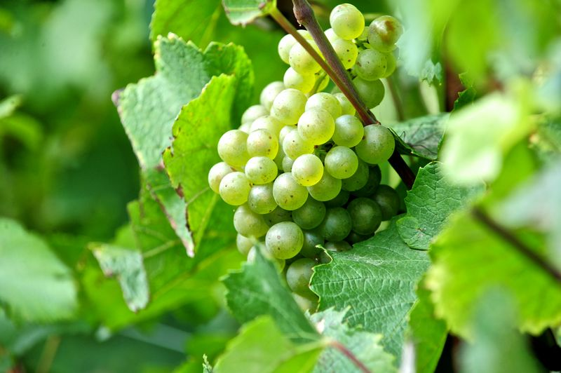 Vignoble Potel Prieux